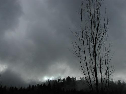 Barnet_park_trees
